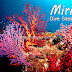 Miri Diving Sites