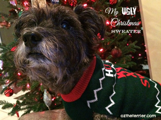 Oz the Terrier poses for holiday photo wearing his PetSmart Ugly Christmas Sweater