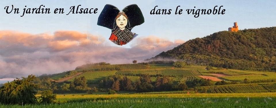 Jardin-Alsace-Vignoble
