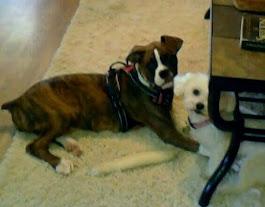 Sasha and Miss Izzy