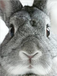 coelho, páscoa