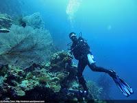 Keindahan Surga Taman Laut Wisata Kepulauan Padaido (Biak, Papua)