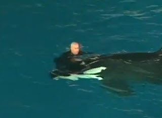 entrenador atacado por ballena orca asesina