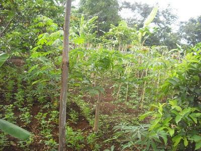 Lahan Perkebunan, Sarana Latihan Keterampilan Anak di YABNI