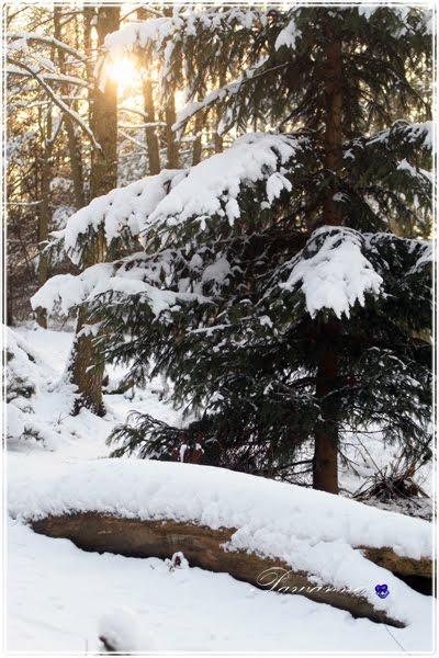 Zima w ogrodzie - klik
