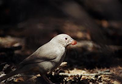 Bird, Big Bend National Park