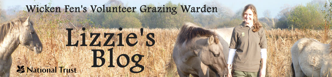 Wicken Fen Volunteer Grazing Warden's Blog