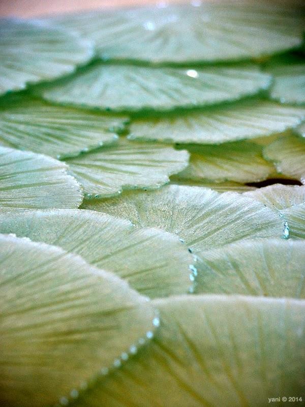 glass lilypads