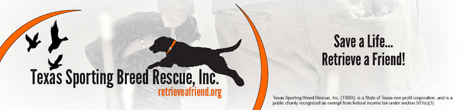 Texas Sporting Breed Rescue | Save a Life...Retrieve a Friend