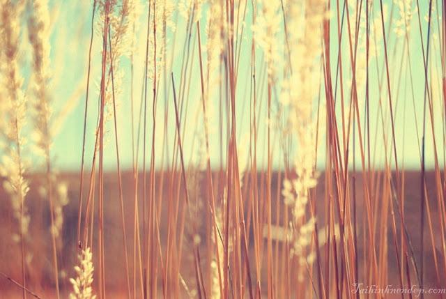 Hình nền cánh đồng tuyệt đẹp tại Taihinnhnendep.com