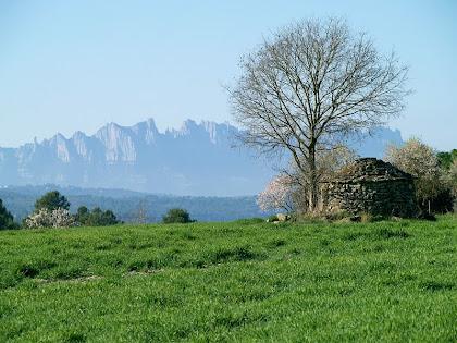 Bonica imatge d'una barraca de vinya amb Montserrat al fons, des de la cruïlla del Camí de Les Tàpies