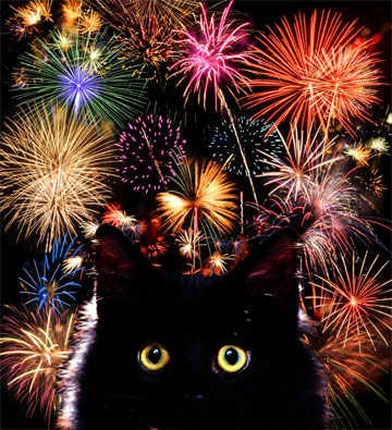 Image result for new years eve cat images