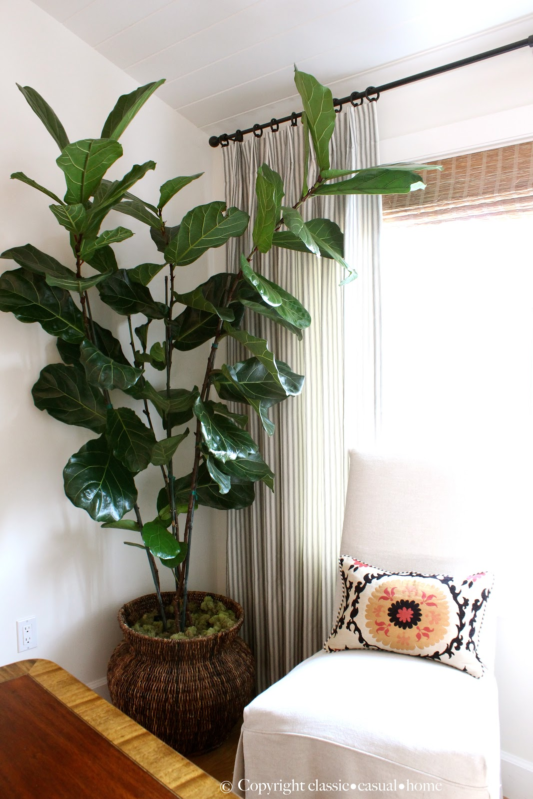 Six easy care indoor plant ideas classic casual home for Indoor greenery ideas