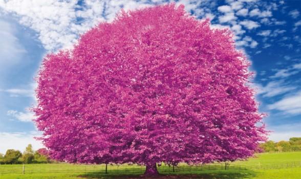 Cosa fare a Milano domenica 8 settembre: domenica tutta rosa ai Giardini Indro Montanelli