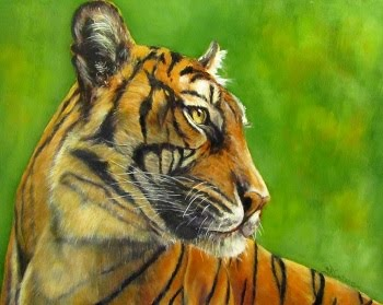 Javan, a tiger portrait