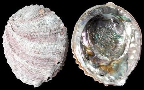 """Ngọc trai bào ngư """"Big Pink Pearl"""": 4,7 triệu USD"""