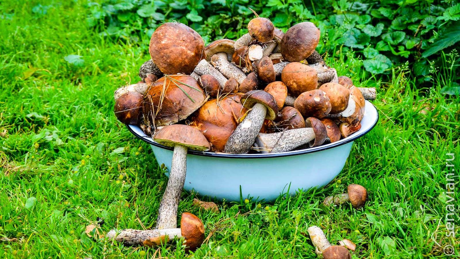 Отдых в деревне в Тверской области, походы за грибами.