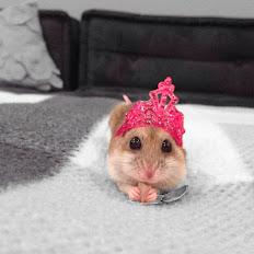 Милые животные фото