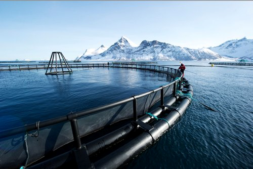 how to start a salmon farm