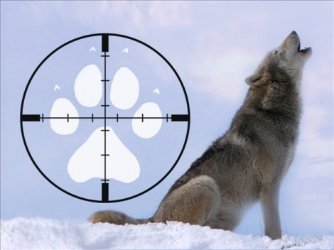 end the wolf hunt save The relationship between wolves and people raises deep questions that  on the  opposite end of the spectrum, to hunt them or even remove.