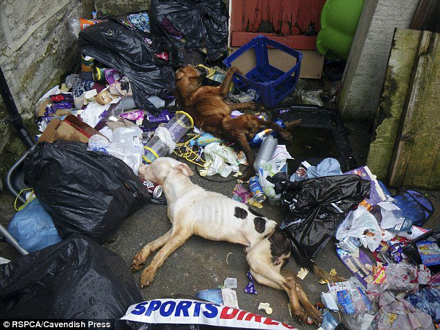 This Woman Leaves Her Two Dogs To Starve To Death Then Throws Them Out With The Trash.