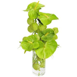 Magnífico arranjo confeccionado em vaso de vidro com antúrios verdes, asclepsias e croton. Dimensões: Alt= 60 cm Larg= 30 cm