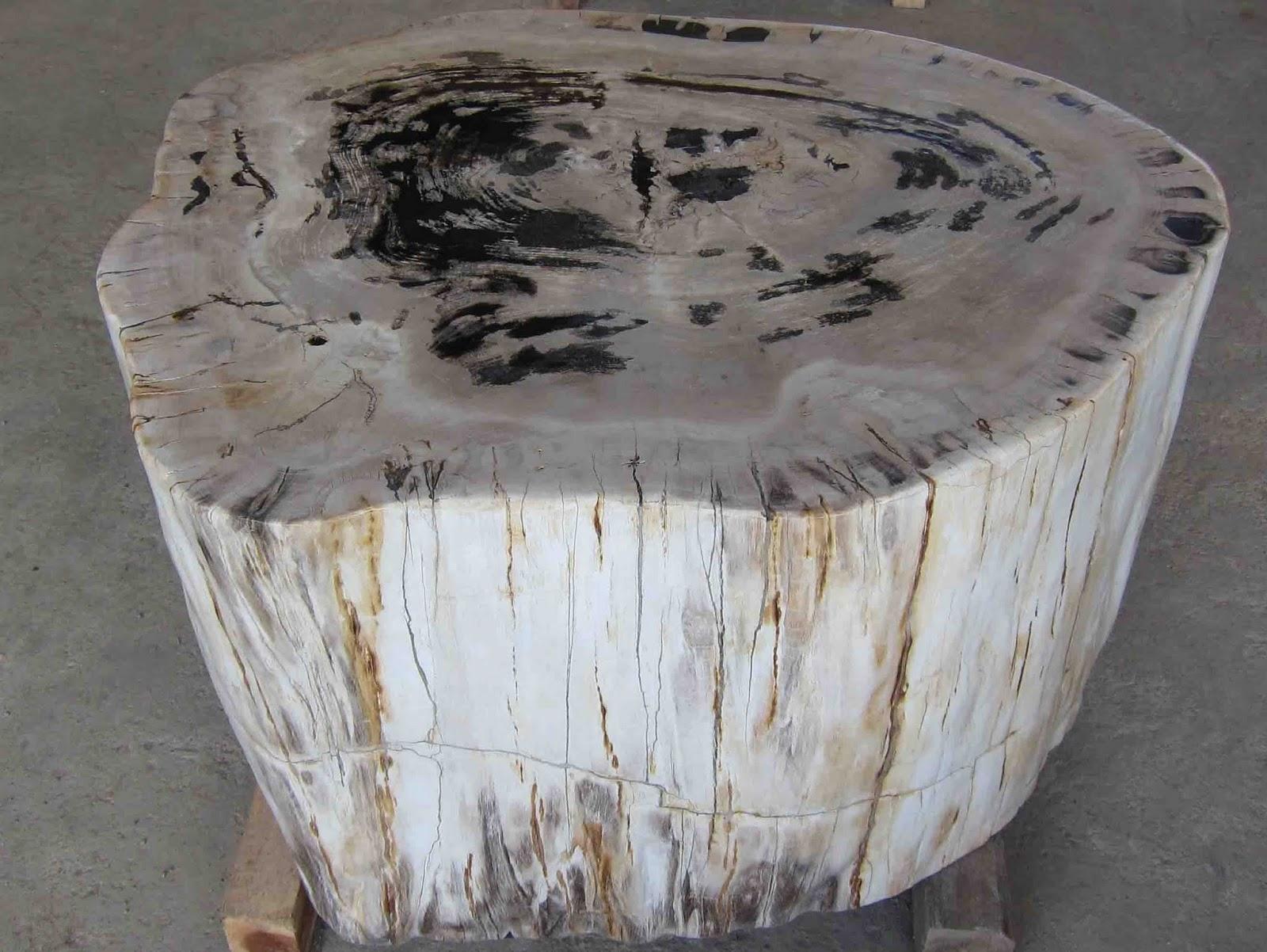 Com petrified wood acacia wood table tops jungle vines