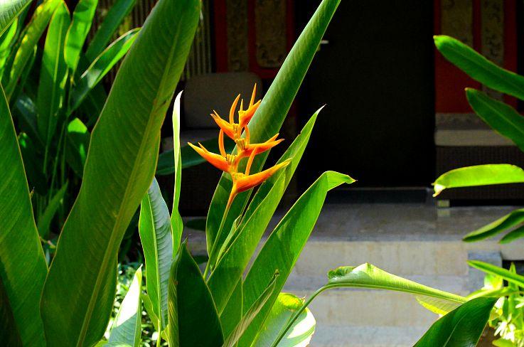 Bali Flower, Bali, Indonnesia