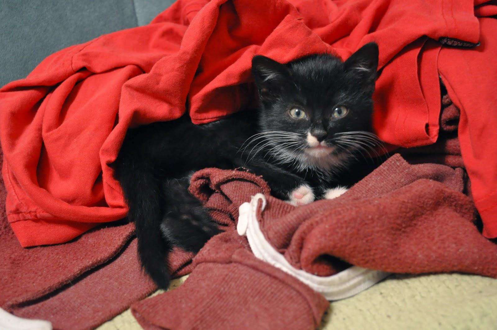 21. Koty, kotały i kotki...