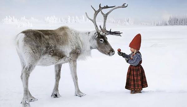 R Reindeer Real close to a real reindeer