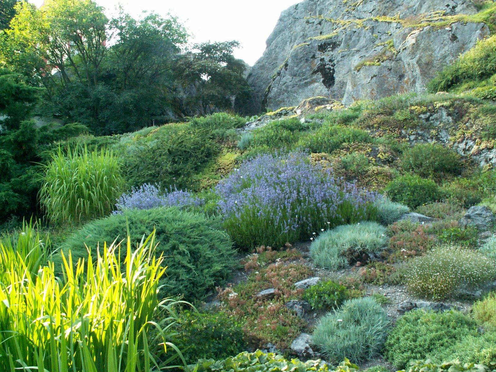 Sabes lo que es un jard n de rocalla for Que es un jardin ornamental