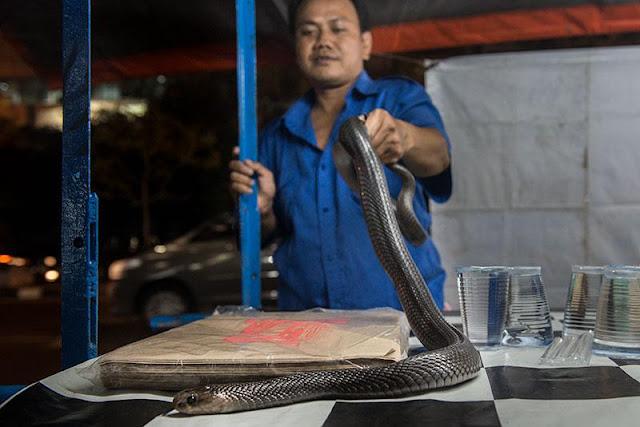 penjual sate ular kobra mangga besar