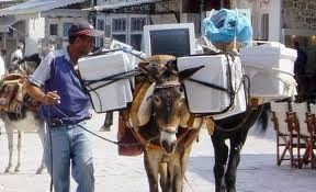 funny picture: transportable computers on donkey