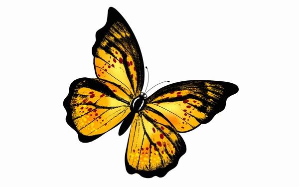 Butterfly Best HD Widescreen Wallpaper