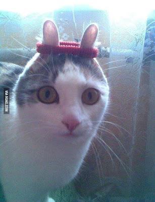 image drole de chat trop marrant