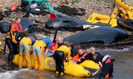 http://1.bp.blogspot.com/-UDvTiNET30k/UEXmAE0NPvI/AAAAAAAAJnU/QOF8jqppJKM/s1600/Stranded-whales-011.jpg
