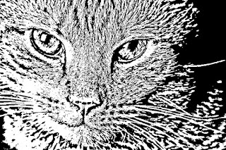 Pyrography - Cat face