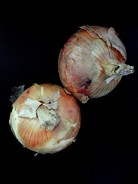 vidalia guys Vidalia sweet onions variety: vidalia sweet  sweet onions from vidalia,  for our security guys) click resend if you haven't received our email got it.