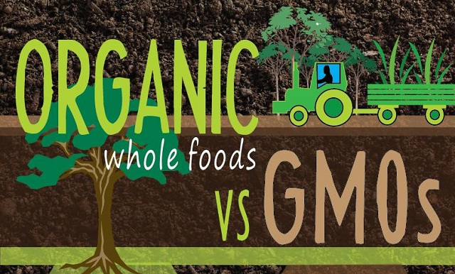 genetically modified foods vs organic foods Genetically modified foods vs organic foods april 10th, 2009 by marcie when i began researching for videos to support the idea that organic foods are by far the best food one can eat, i came across these disturbing videos.