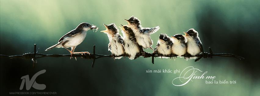 Ảnh bìa chim mẹ và đàn chim non