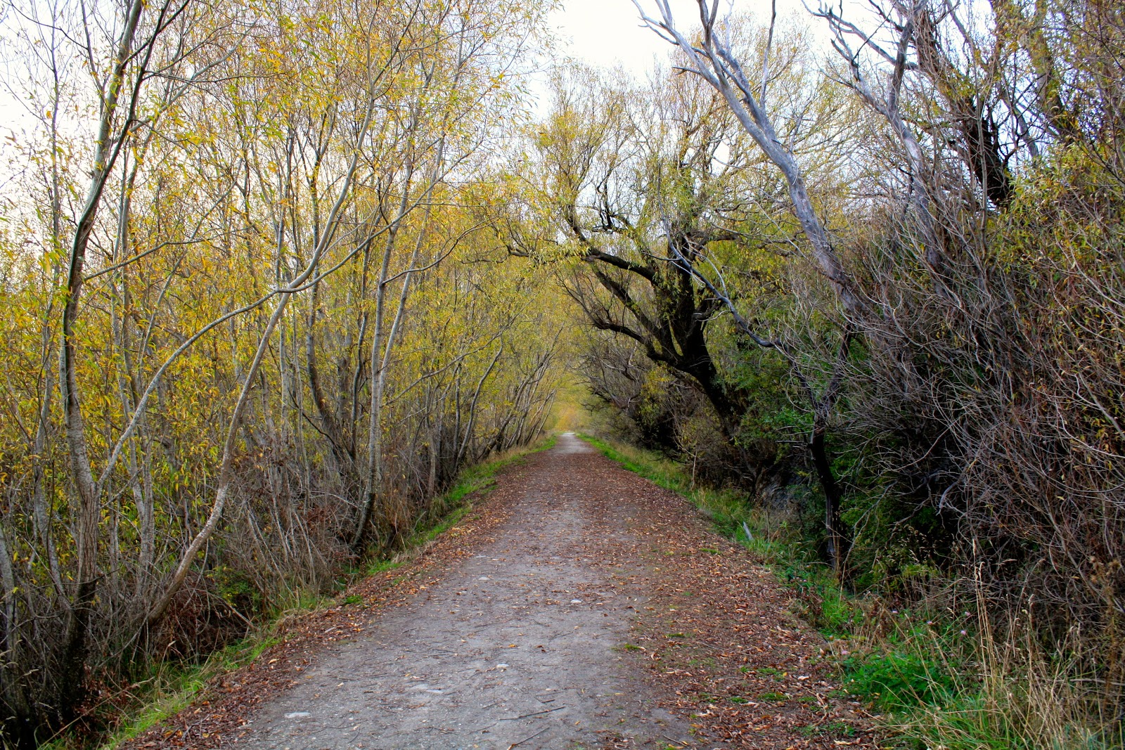 A path leading away into the distance, lined with orange trees.