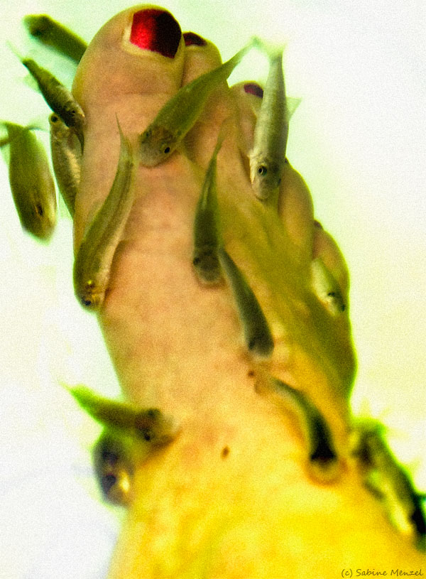 Psynopsis Fish Pedicure Close-Up