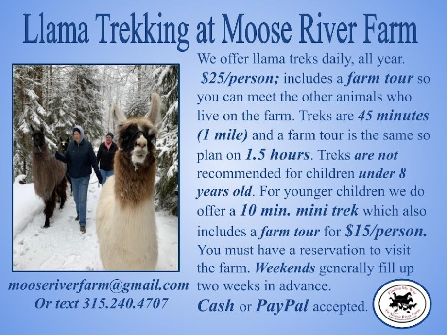 Llama Trekking at Moose River Farm