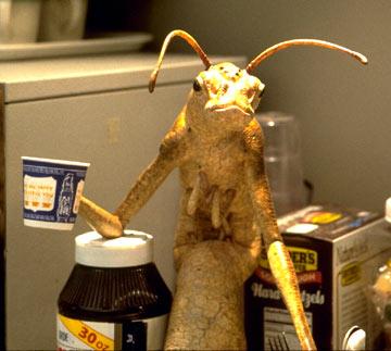 Men In Black Aliens Drinking Coffee Mythic Mysteries: Men ...