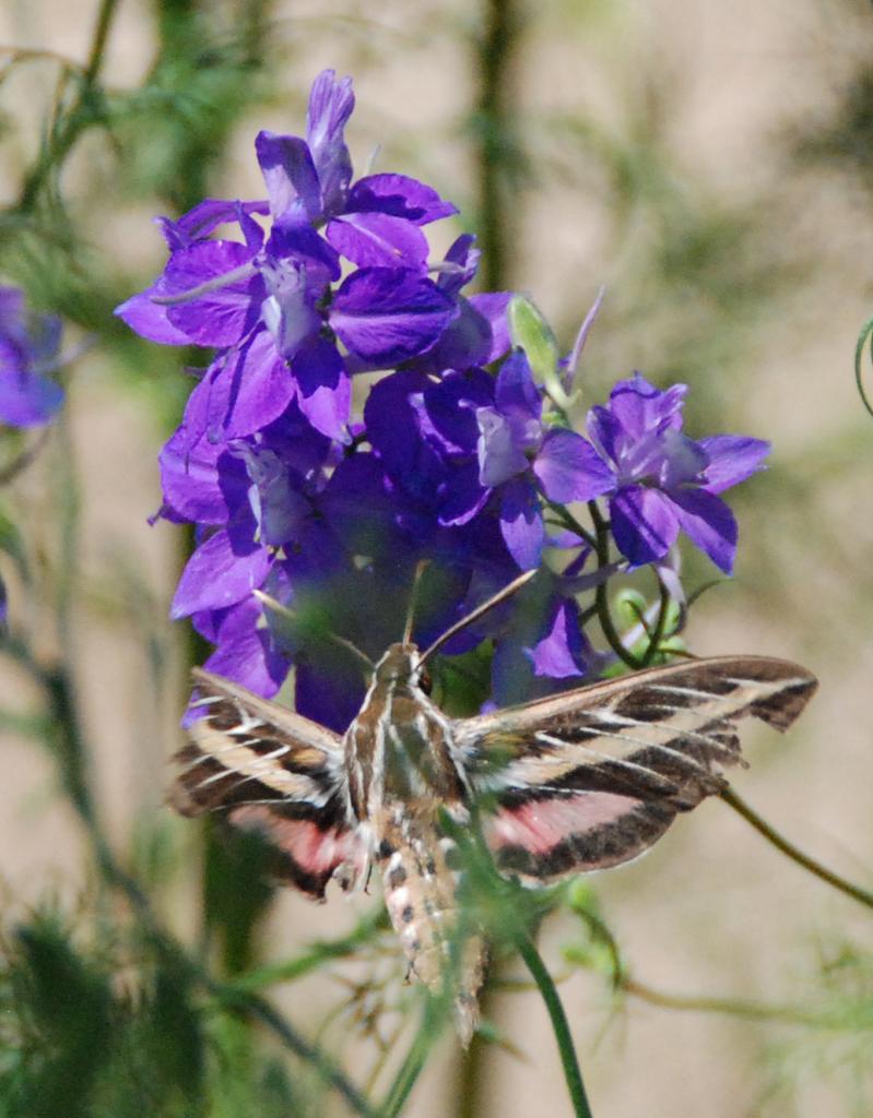 how to kill white moths in garden