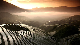 Rice Field Terrace HD Wallpaper