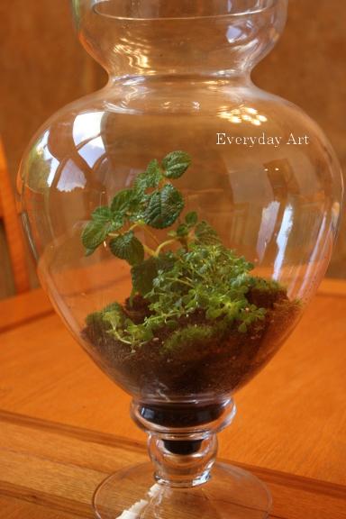 Everyday Art How To Plant A Terrarium