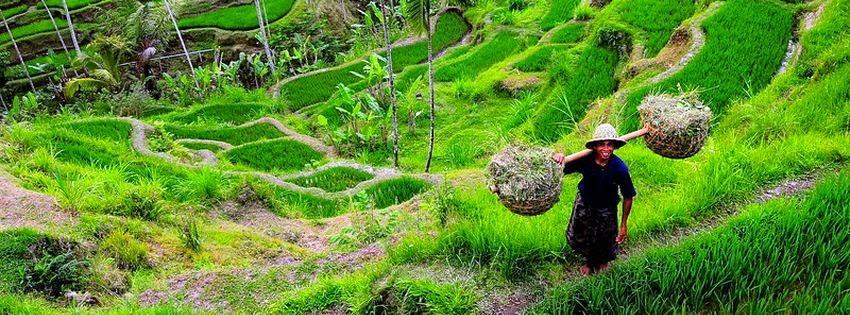 Une jolie couverture facebook Bali