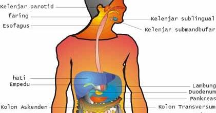 Pengantar Anatomi Fisiologi