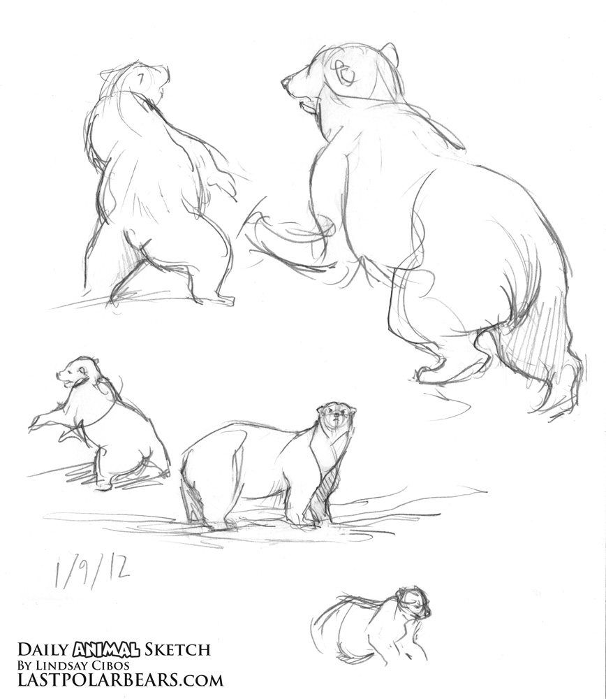 Grizzly bear cubs drawing - photo#24